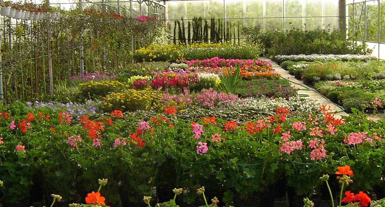 Vendita piante e fiori in Valdarno