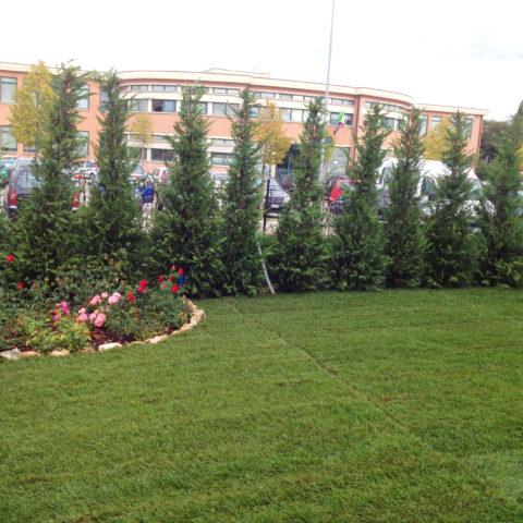 Installazione prato a rotoli Valdarno montevarchi Caiani Vivai Garden