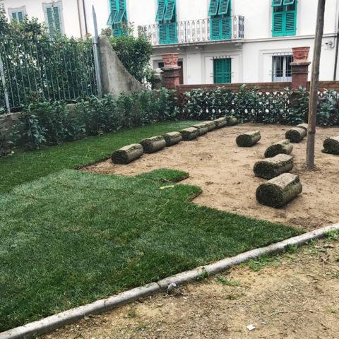 Installazione prato a rotoli Valdarno Valdambra Caiani Vivai Garden