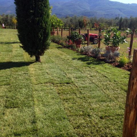 Installazione tappeti erbosi per agriturismi Valdarno Caiani Vivai Garden