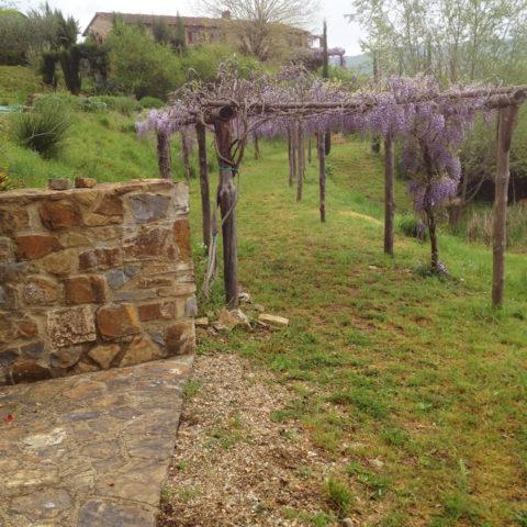 Manutenzione pergolati glicine Valdarno Caiani Vivai Garden