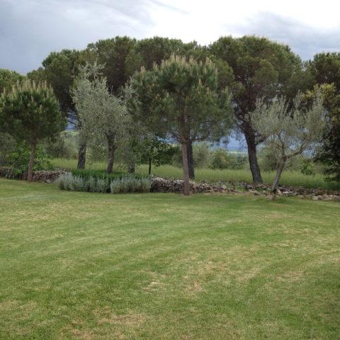 Manutenzione potature alberi Valdambra Caiani Vivai Garden