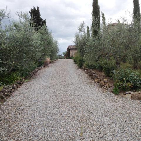 Manutenzione viali alberati Caiani Vivai Garden