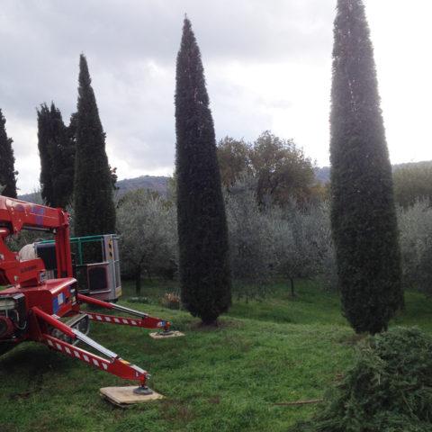 Potatura con piattaforma aerea Arezzo Caiani Vivai Garden