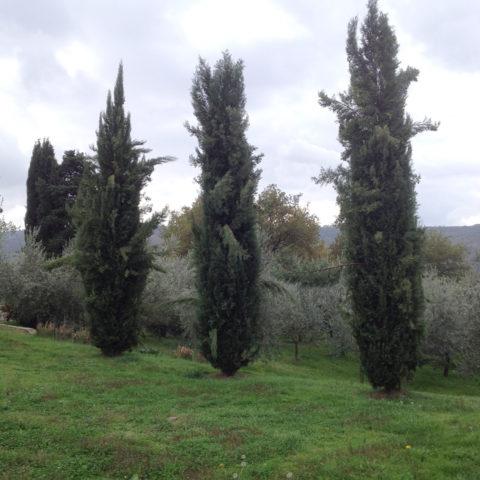 Potatura con piattaforma aerea Siena Caiani Vivai Garden