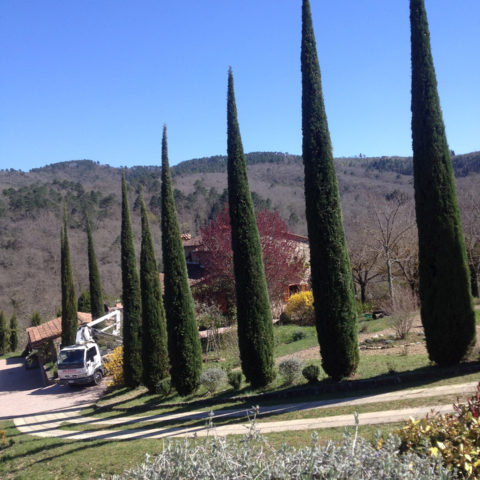 Potature cipressi Valdambra Caiani Vivai Garden