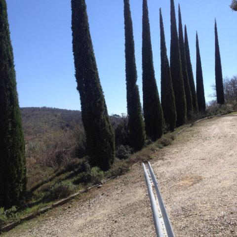 Potature cipressi Valdarno Caiani Vivai Garden