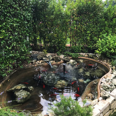 Realizzazione aree verdi con laghetto Valdarno Caiani Vivai Garden