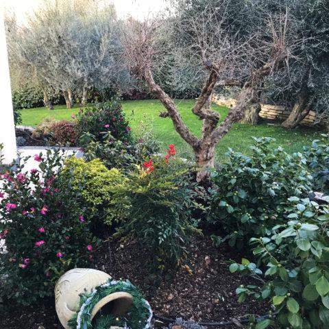 Realizzazione giardini Arezzo vivai garden
