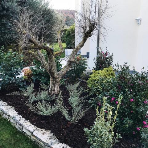 Realizzazione giardini e aiuole Arezzo vivai garden