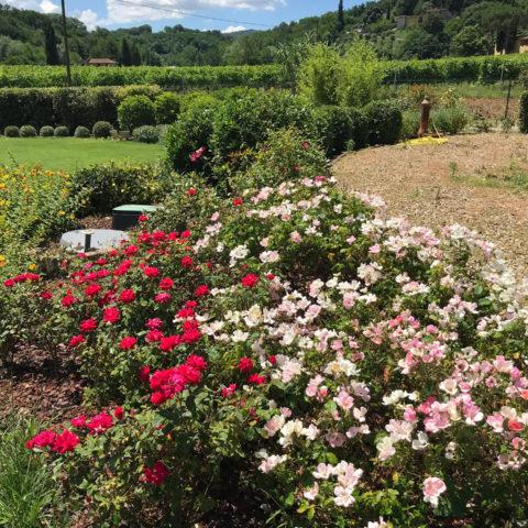Realizzazione giardini fioriti Valdarno Caiani Vivai Garden