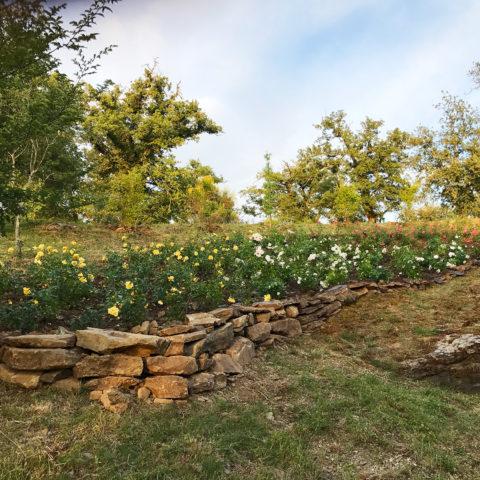 Realizzazione giardini rustici provincia Siena Caiani Vivai Garden