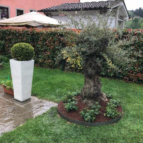Realizzazione giardino con olivo secolare Valdarno Caiani Vivai Garden