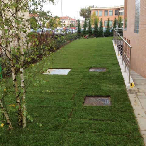 Realizzazione giardino tappeto erboso Valdarno montevarchi Caiani Vivai Garden