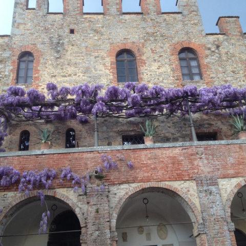 Realizzazione pergolati glicine Valdambra Valdarno provincia Arezzo Siena Caiani Vivai Garden